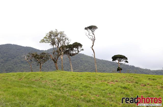 Nuwara Eliya scenery, Sri Lanka  - Read Photos