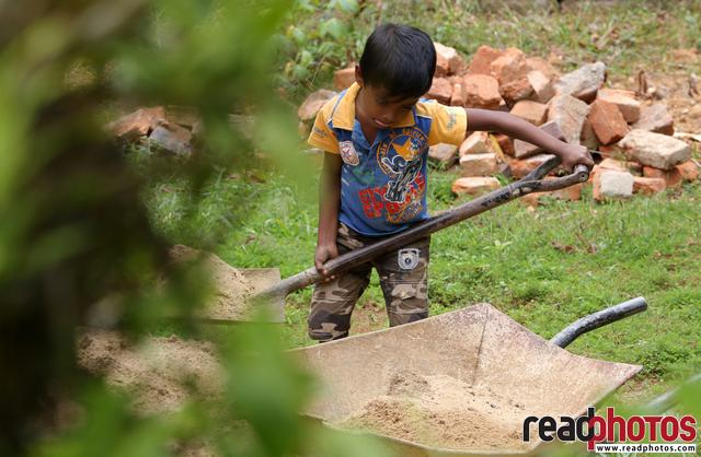 Small boy working like a grown man, Sri Lanka - Read Photos