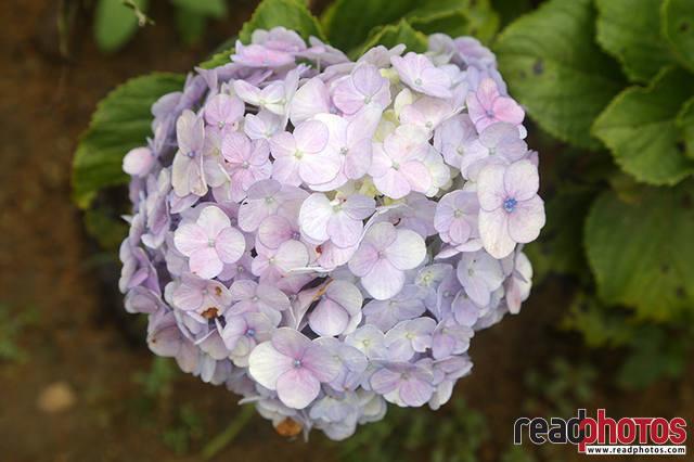 Flowers, Thalawakale, Sri Lanka (3)