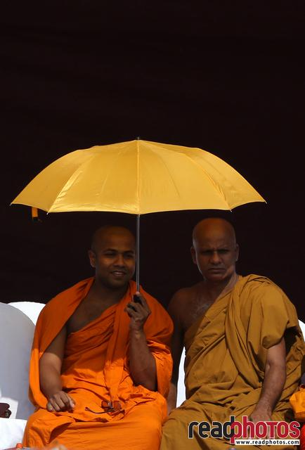 Buddhist monks, at an assembly, Sri Lanka