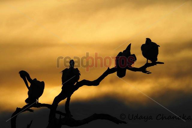 Birds silhouette, Sri Lanka  - Read Photos