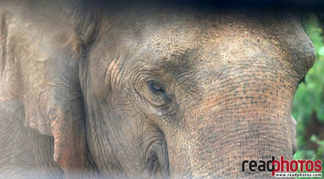 Eye of a wild elephant, Sri Lanka - Read Photos