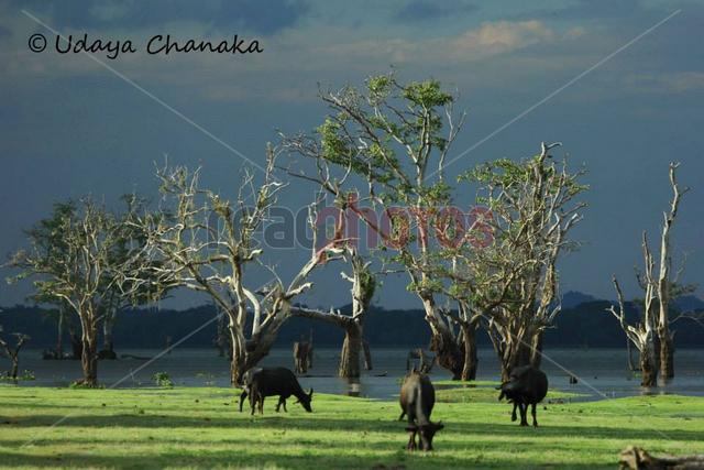 Lake view in the evening, Sri Lanka - Read Photos