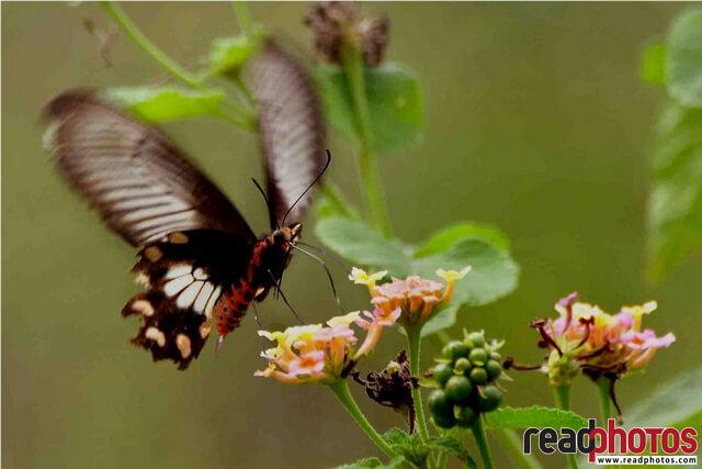 Butterfly and the flower - Read Photos