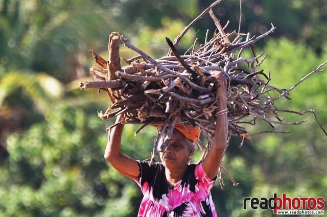 A old women carry firewood, Sri Lanka