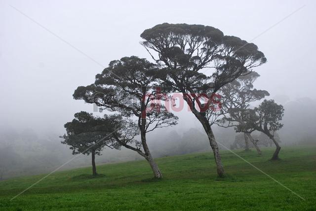 Trees, Nuwara eliya, Sri Lanka (2)