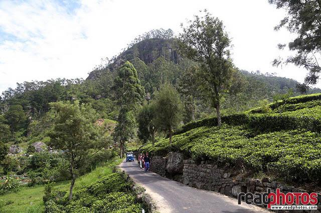 Upcountry, Sri Lanka - Read Photos