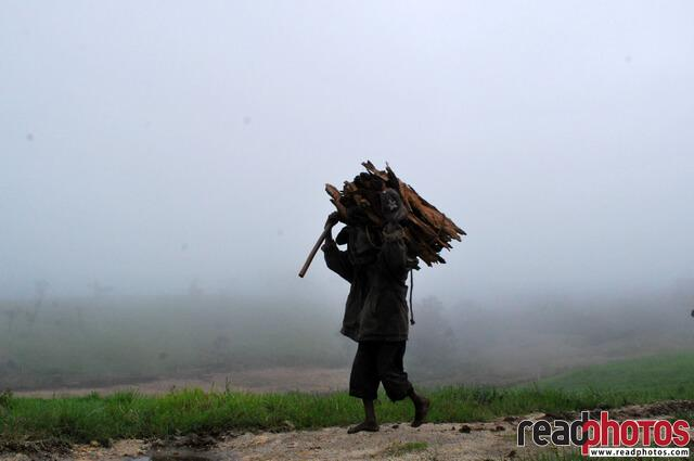 Firewood seller, Nuwara Eliya, Horton, Sri Lanka - Read Photos