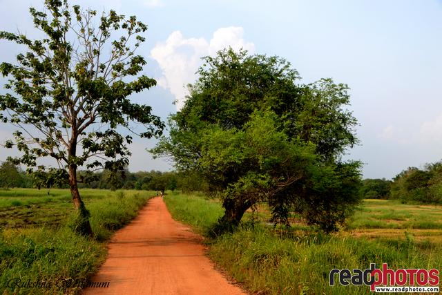 A village road in Sri Lanka - Read Photos